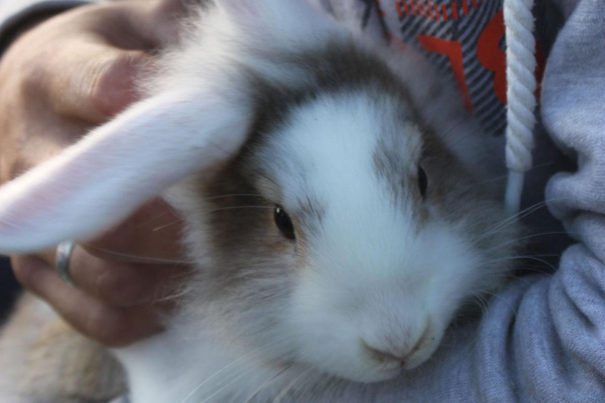 Schnuffel, ein Kaninchen